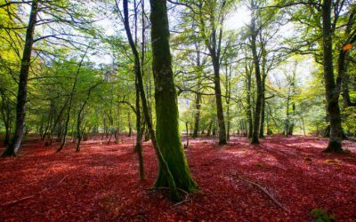 Qué ver en la Selva de Irati
