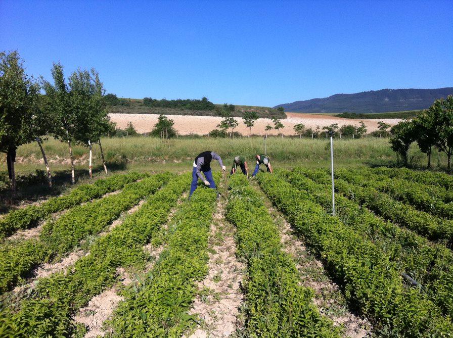 Plantaciones Josenea Bio
